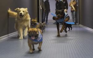 Собаки игроков минского Динамо провели тренировку с командой (видео)