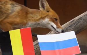 Лиса стала главным прогнозистом Евро-2020 (видео)